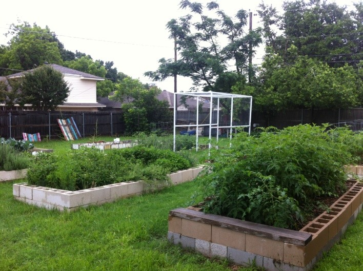 Community Gardens And Urban Agriculture North Tx Garden Of The Month Planting Seeds