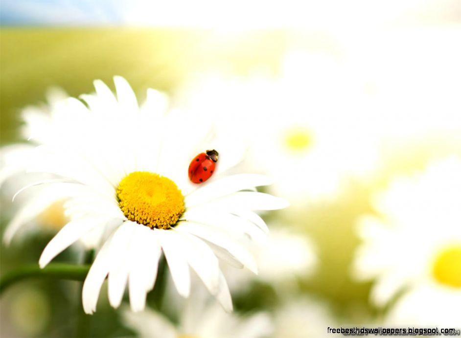 Spring Flowers Screensavers Free Best Hd Wallpapers