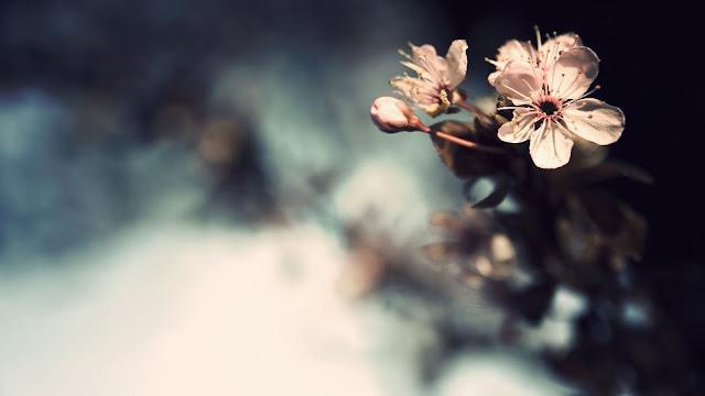 Blossom Twig