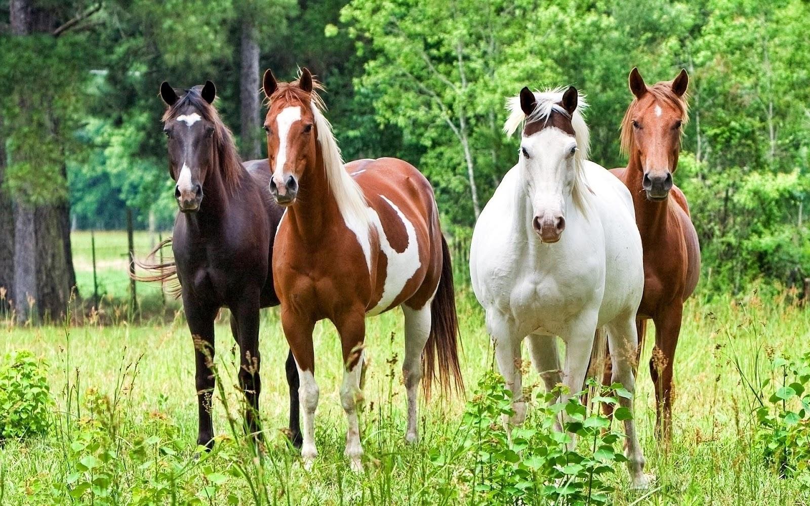 Simple   Wallpaper Horse Desktop Background - horse+wallpapers+hd+(12)  Best Photo Reference_56941.jpg