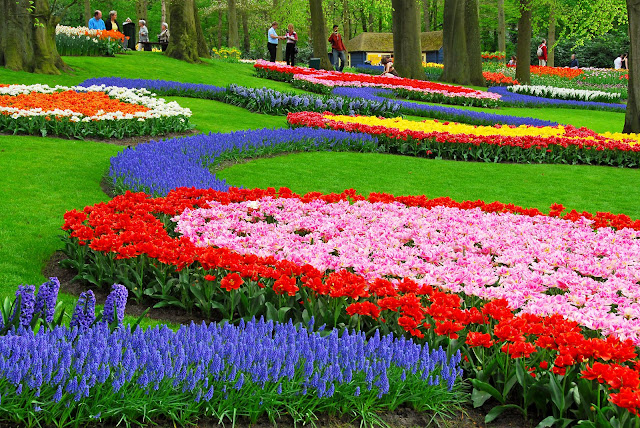 One of the most Flower Garden in the world: Keukenhof