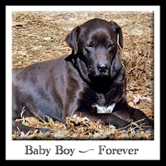 Baby Boy RIP