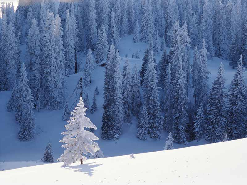 winter forest scenery wallpaper me