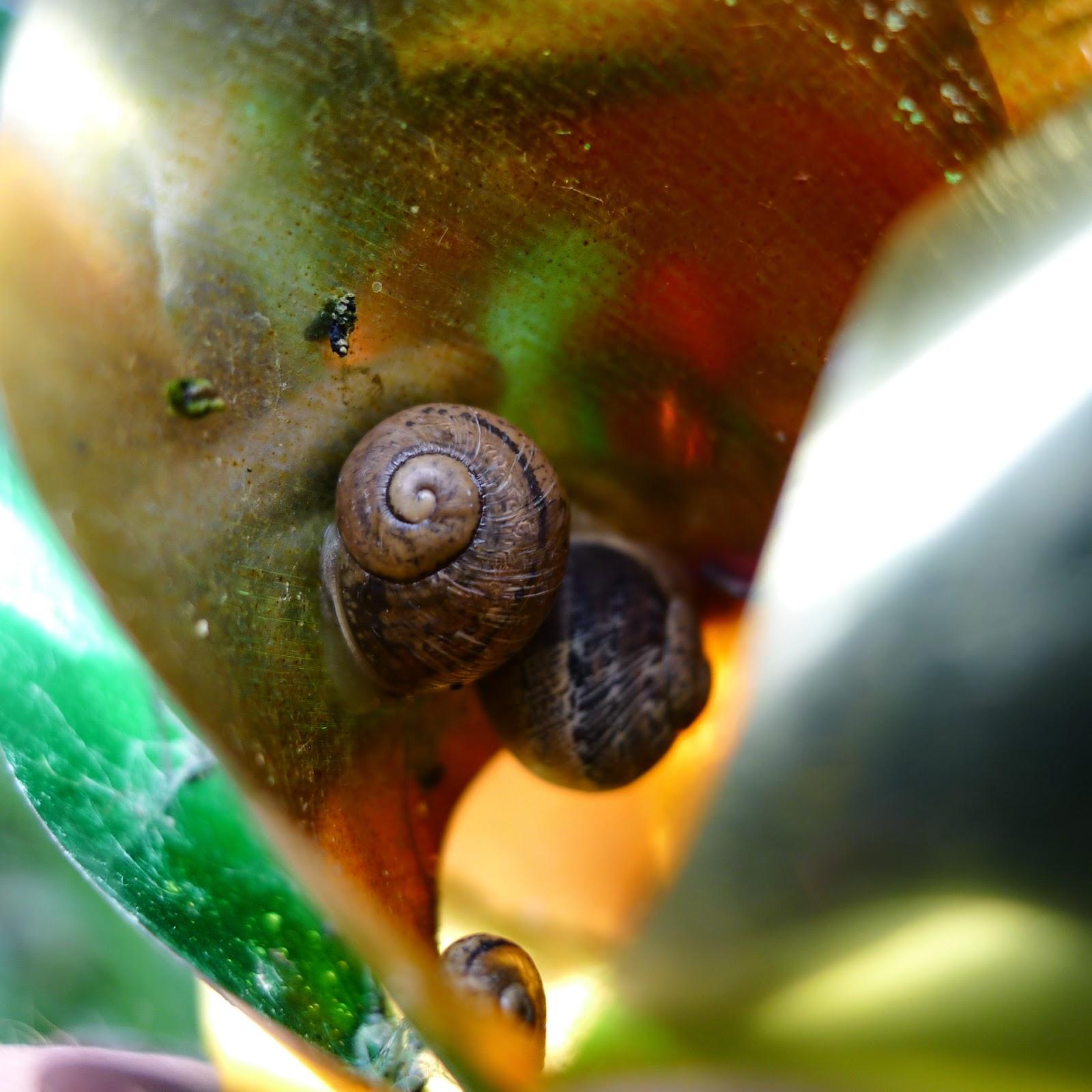 Garden Share Collective: May | Five Course Garden