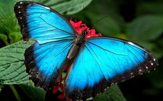 [Image: Blue+Butterfly.jpg]