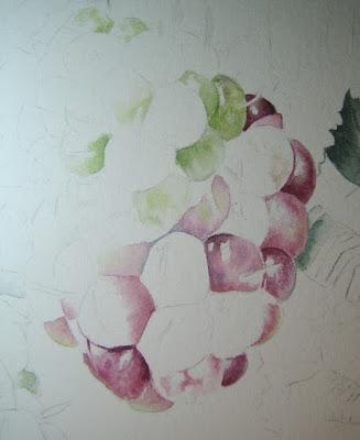 Rubus ulmifolius fruit
