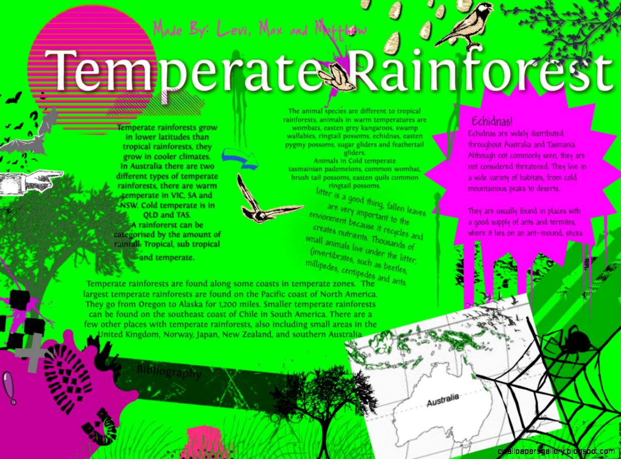 temperate rainforest  Publish with Glogster