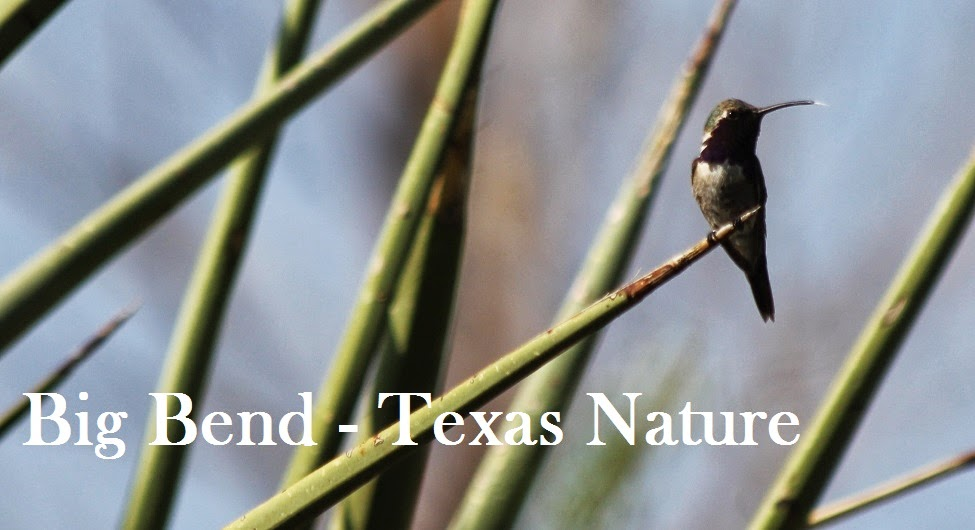 Big Bend - Texas Nature