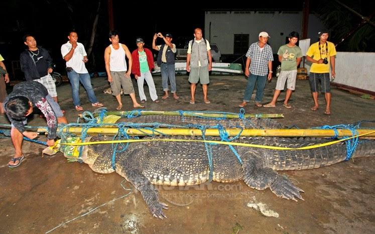 16-foot crocodile caught in Palawan