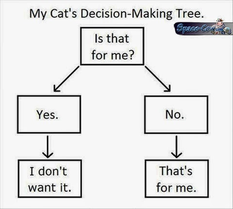 funny cats humor pictures