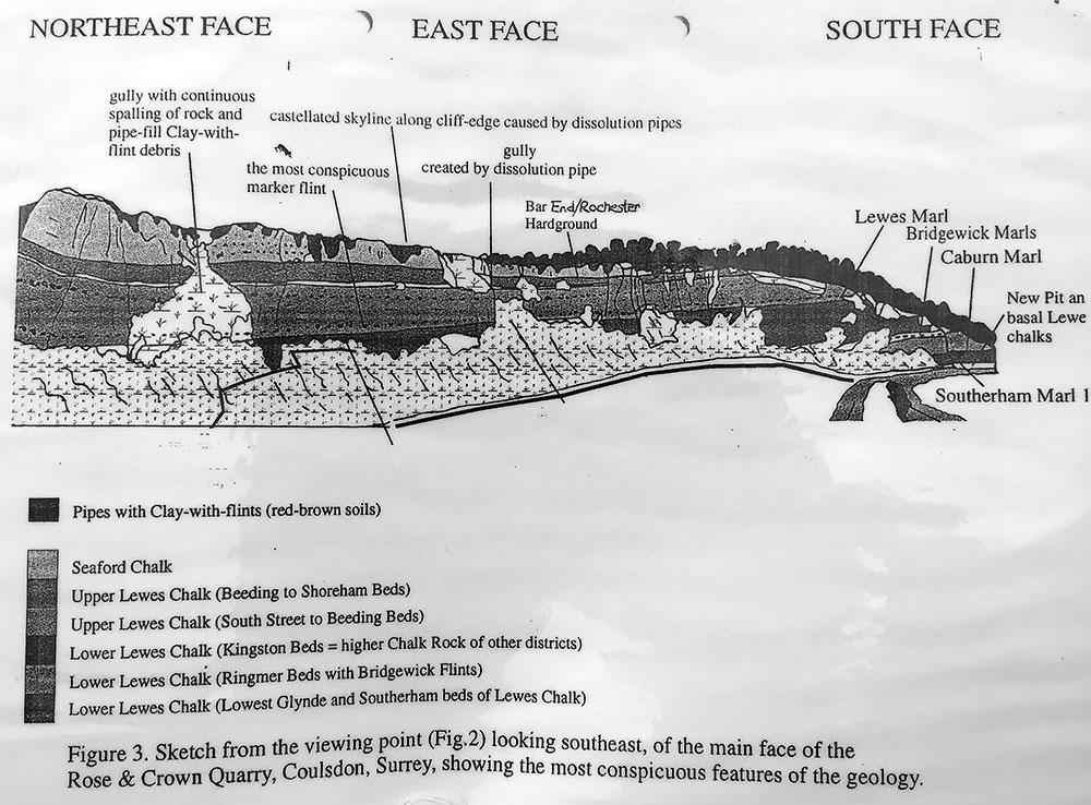 Diagram of exposed strata in Riddlesdown quarry.