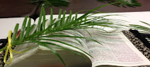 THE Word for PALM SUNDAY