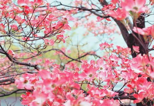 Фото на аву вк весна