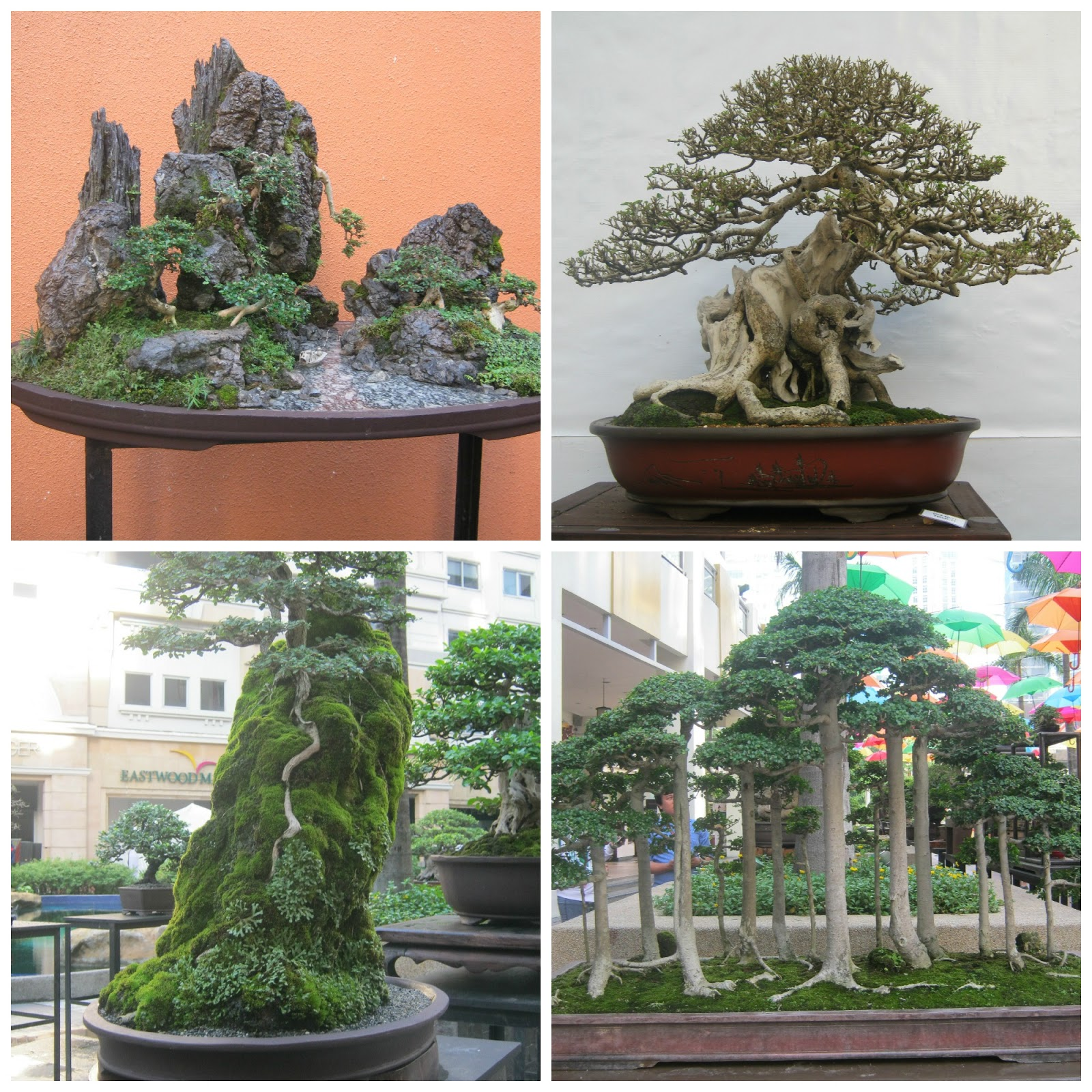 office bonsai. There Were About 200 Bonsai Plants On Exhibit. I Just Picked A Few But Trust Me, The Exhibit Itself Was Sight To Behold. Office
