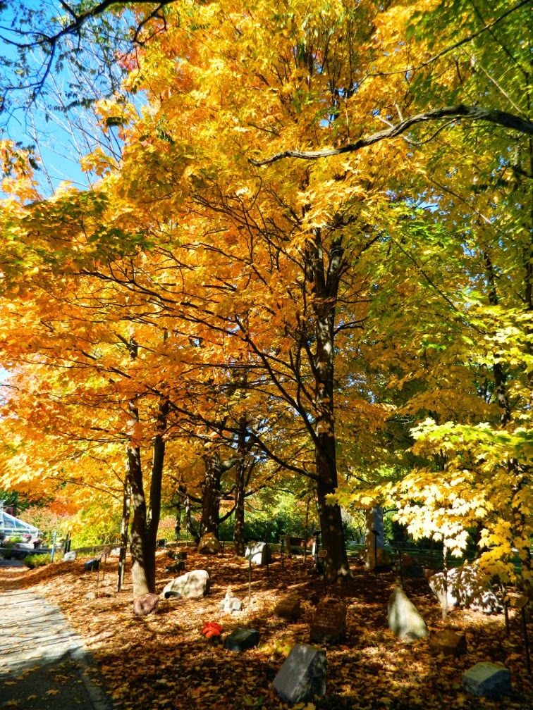 Mount Pleasant Cemetery Remembrance Walk fall foliage by garden muses-not another Toronto gardening blog