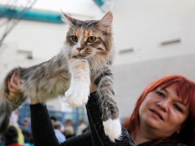 pameran kucing internasional di israel