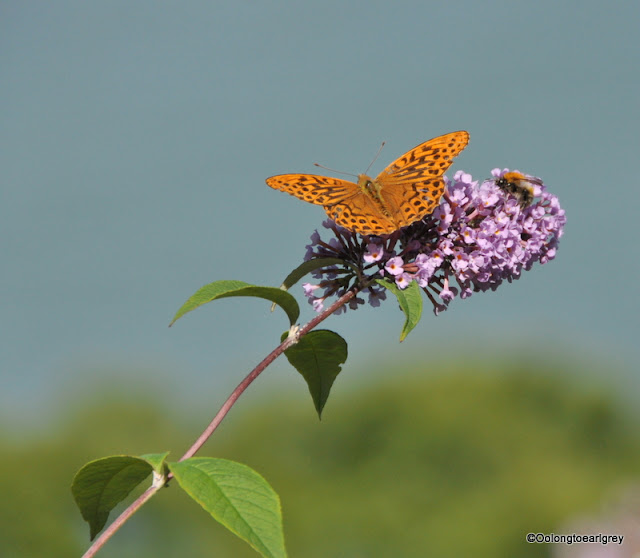 Butterfly and Bee, Lynton, Devon, UK