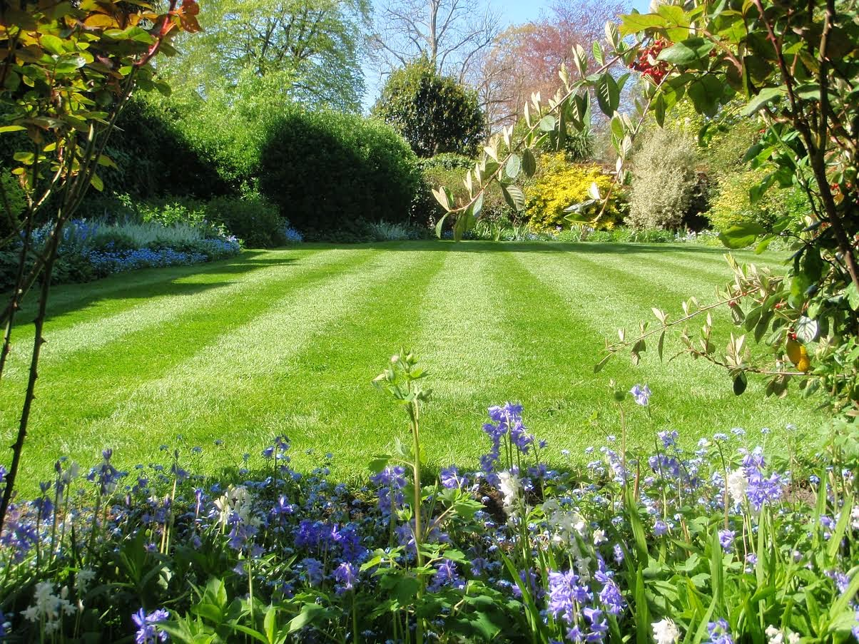 Top tips for mowing lawns eds garden services news for Lawn mowing and gardening services