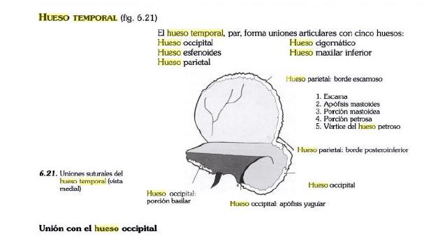 Anatomía del Cráneo y Cara: 2016