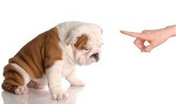 It's Easy To Start Dog Training At Home