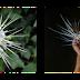 Nama Bunga-bunga yang dikaitkan dengan haiwan