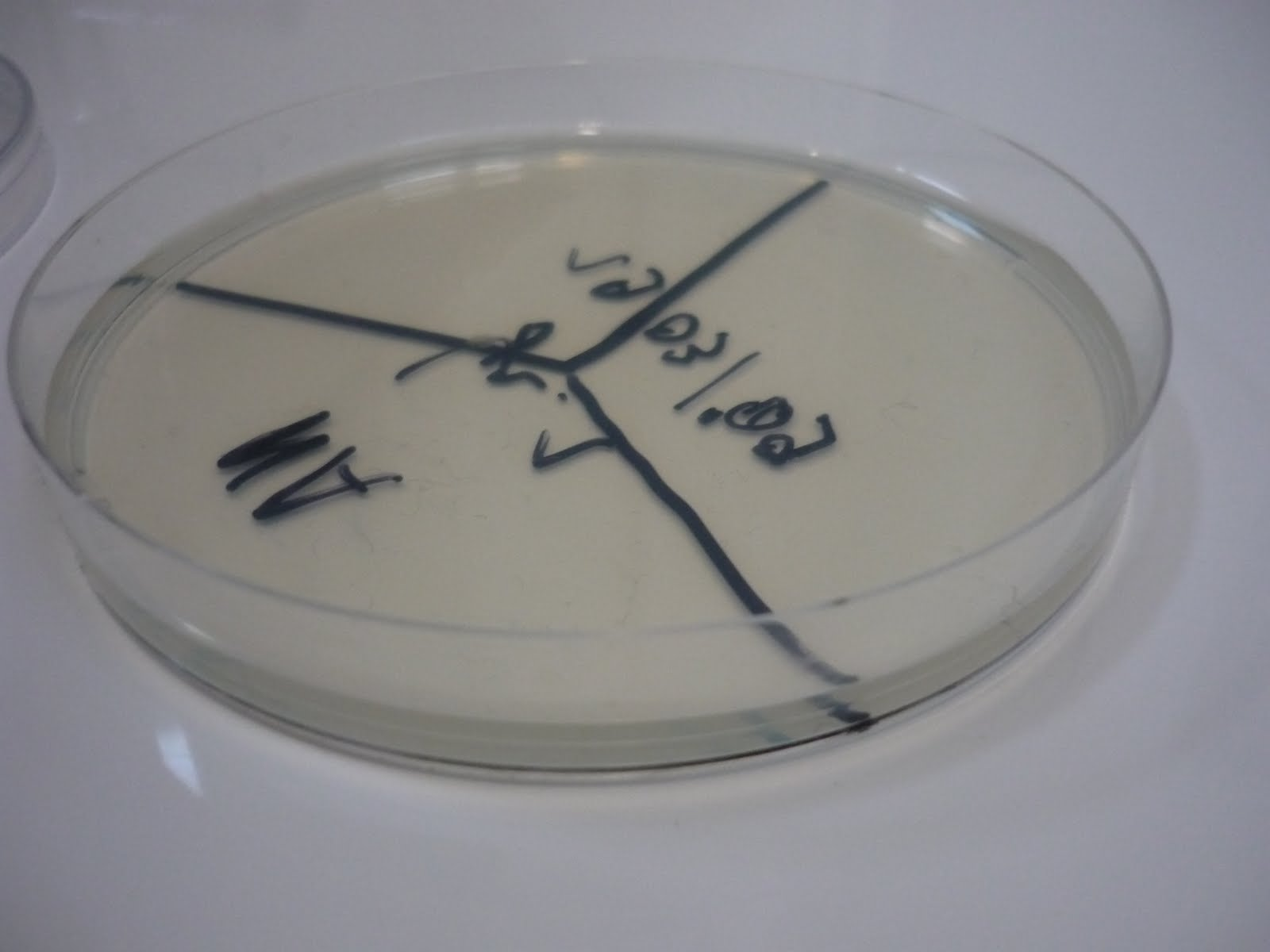 how to make nutrient agar plates