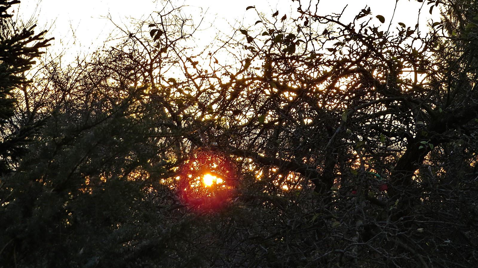 Die Morgendammerung Des Valhalla - Untergang