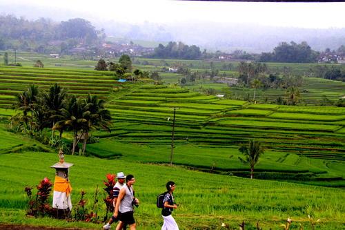 Subak Bali Diambang Kehancuran