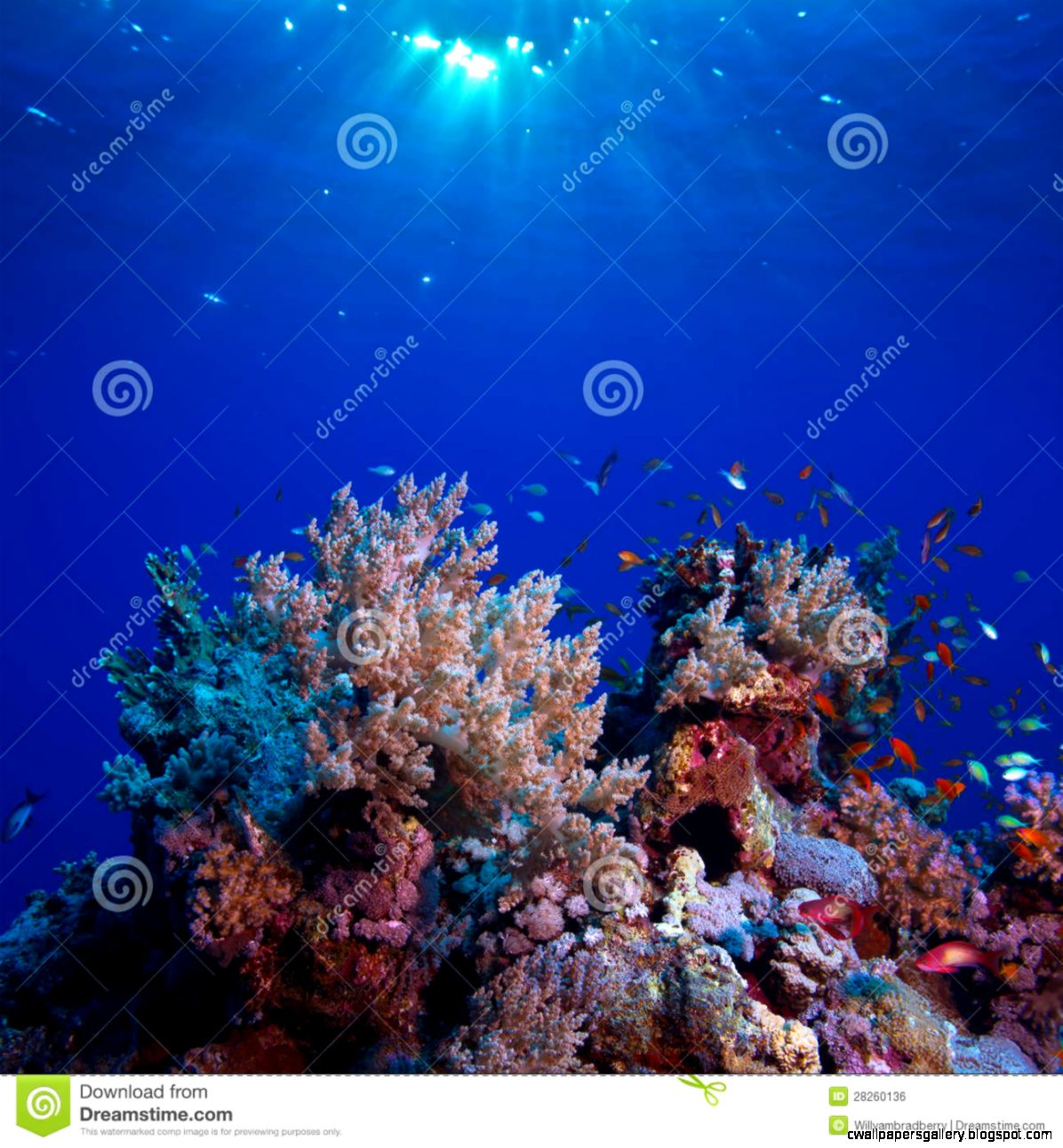 Underwater Scenery Beautiful C Reef Full Of Colorful Fish