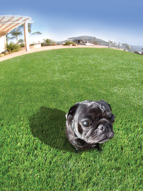 Can Dogs Pee On Fake Grass