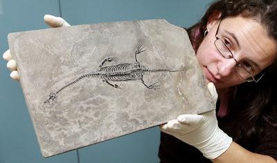 http://3.bp.blogspot.com/-oxJWw0dkajo/TtxyuiDwaWI/AAAAAAAAVE8/K9WjUl0IVHA/s1600/australia-museum-victoria-chinese-reptile-fossil.jpg