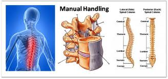 wd training centre manual handling training course on saturday 17th rh wdtrainingcentre1 blogspot com when moving and handling the spine needs to be manual handling spine model