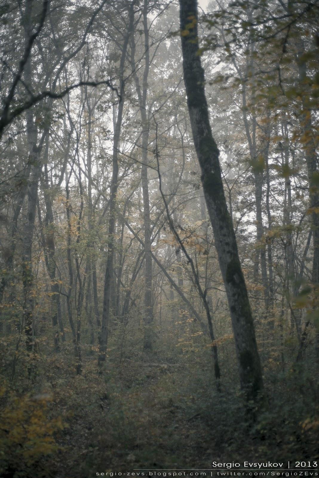 Лес в тумане на Кубани