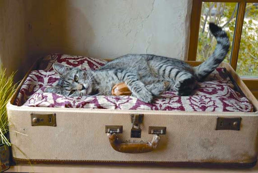 βαλίτσα, κρεβάτι για γάτες, κρεβάτι για σκύλους,