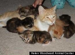 gambar Cindy dan kelima anaknya