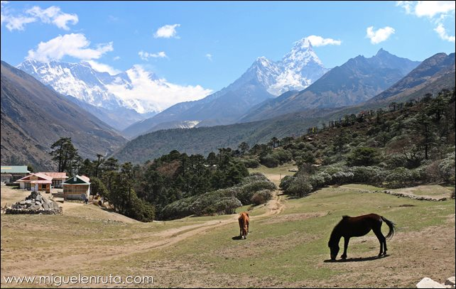 Trek-Campo-Base-Everest-Namche-Bazaar-Tengboche_10