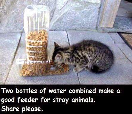 sokak hayvanlarını beslemek için güzel bir fikir