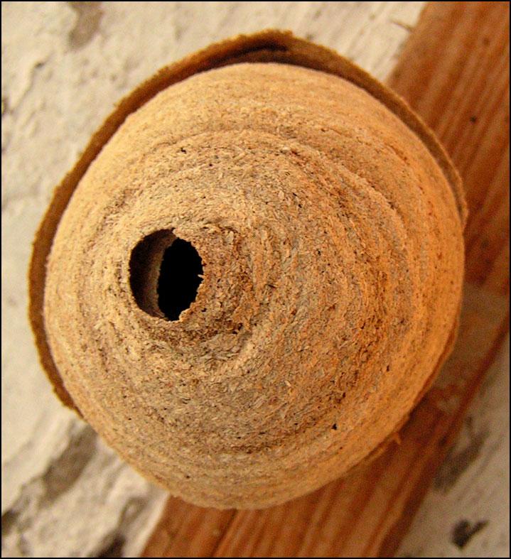 Objets trouv s nid de frelon - Petit nid de frelon ...