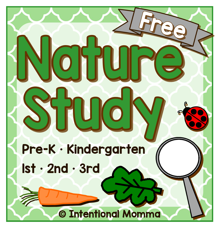 science centers kindergarten seasons plants easy worksheets