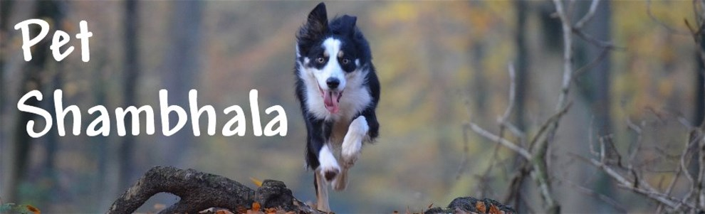 Pet Shambhala
