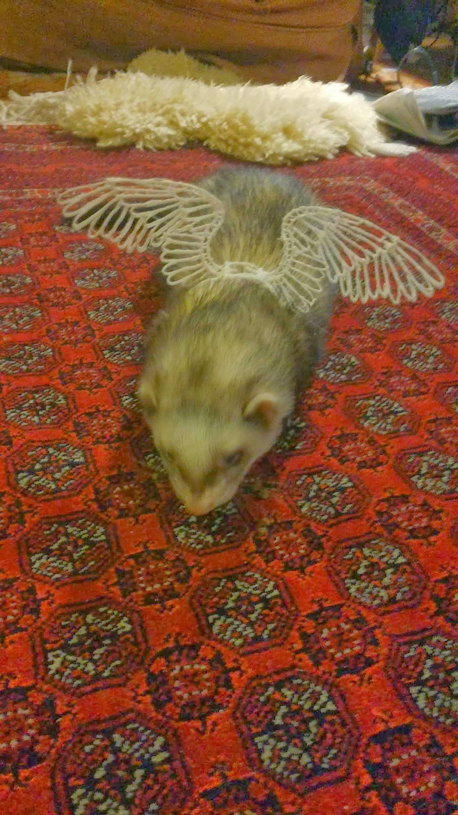 Funny animals of the week - 20 December 2013 (40 pics), cute ferret wears wings