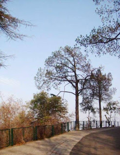 Kasauli (Best Honeymoon Destinations In India) 3