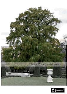 Senda botánica en el Retiro en Madrid. Ocio verde en Madrid.