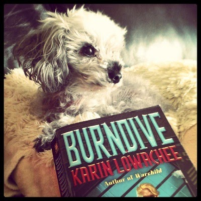 A fuzzy grey poodle, Murchie, lays on a sheep-shaped pillow with his head twisted to the right side of the frame. He gazes into the distance in dramatic fashion. His hair is quite messy. Before him sits a paperback copy of Burndive with only the title and the author, Karin Lowachee, visible.