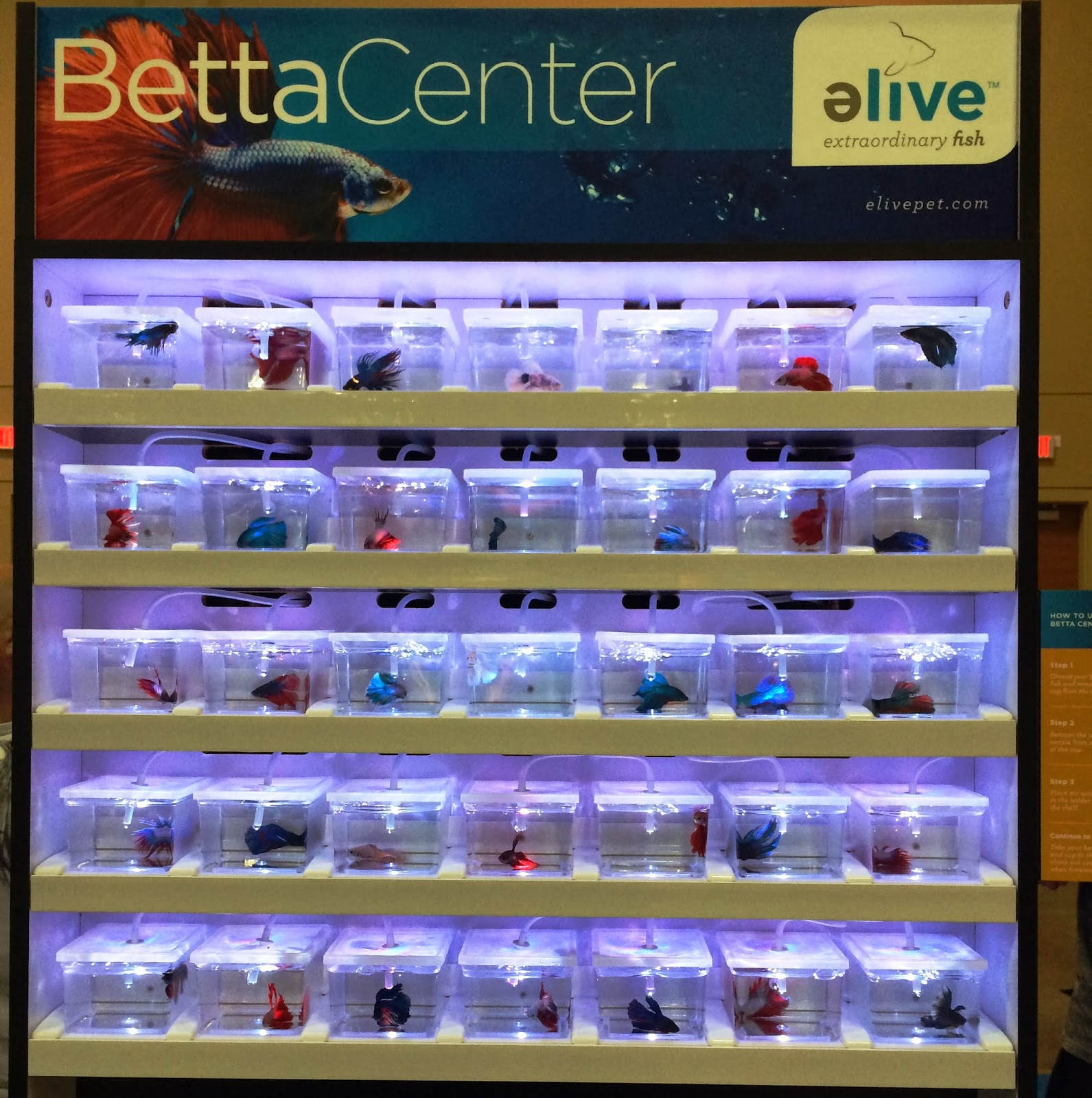 Are betta fish frowned upon aquariums for Betta fish care sheet