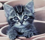¡Bienvenido! Espero que pases un buen rato curioseando por aqui