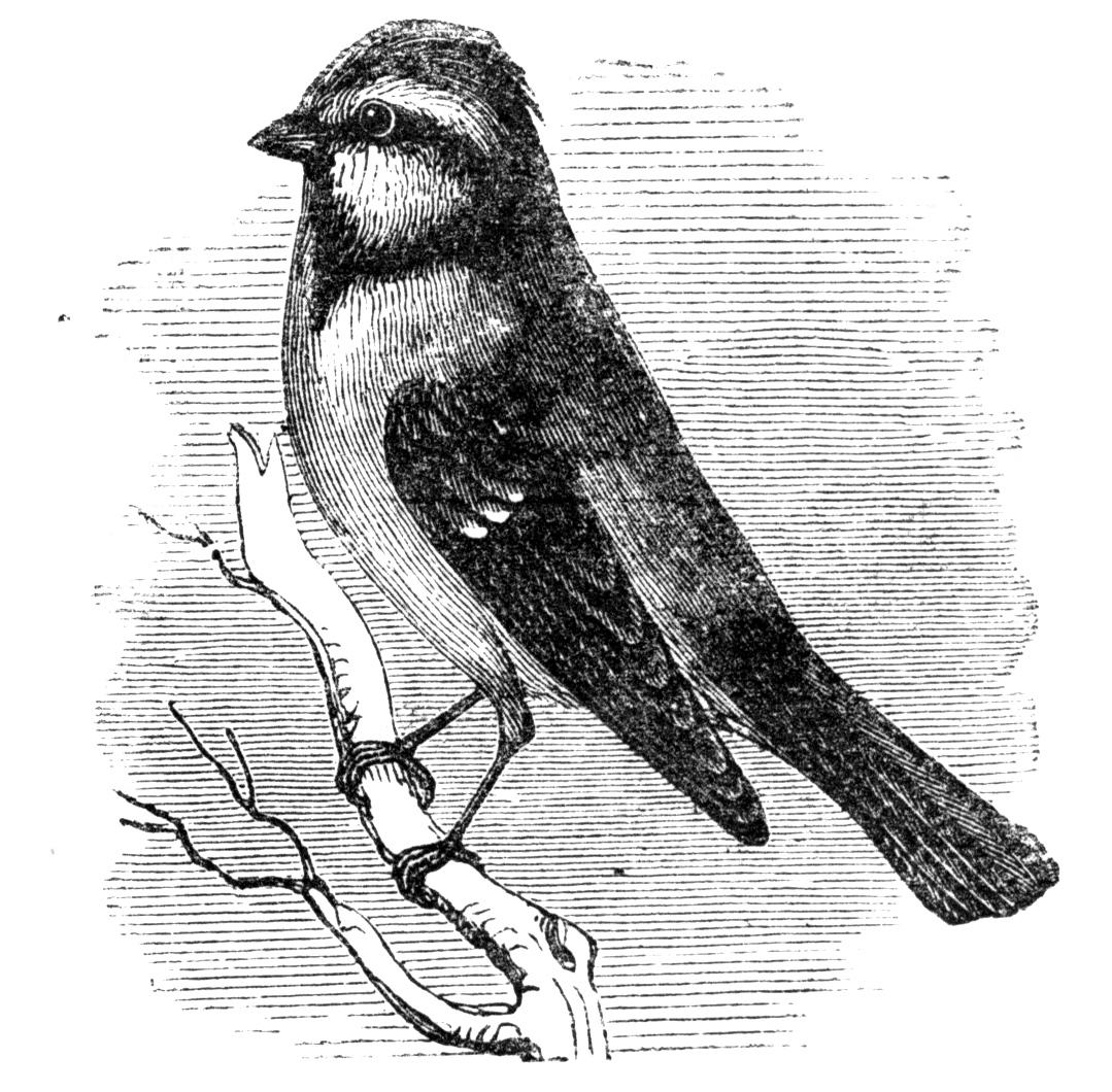 http://3.bp.blogspot.com/-p-MbQ9xSsH8/VLPiNlXBCxI/AAAAAAAAPaw/JkFwNjx1BVk/s1600/bird1.cv.jpg