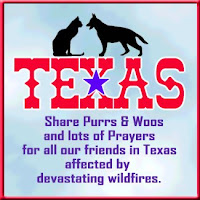 Please Purr For Texas