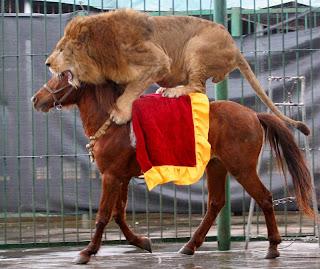 Imagenes Graciosas de Animales,Leon