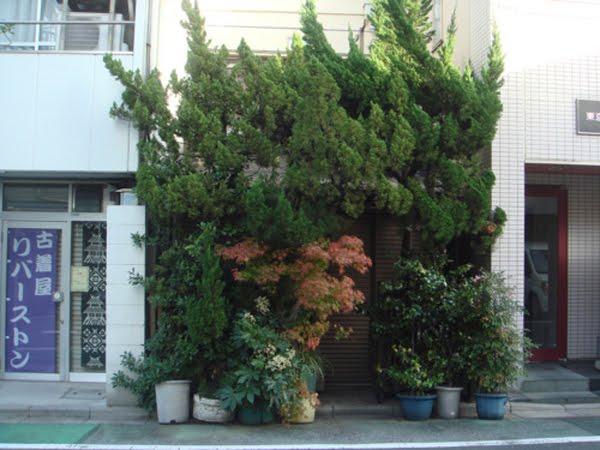 plants as buildings